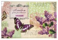 """Альбом для рисования """"Бабочка и сирень"""" (40 л., А4)"""